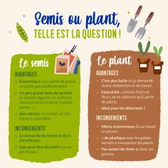 Semis ou plant, telle est la question !